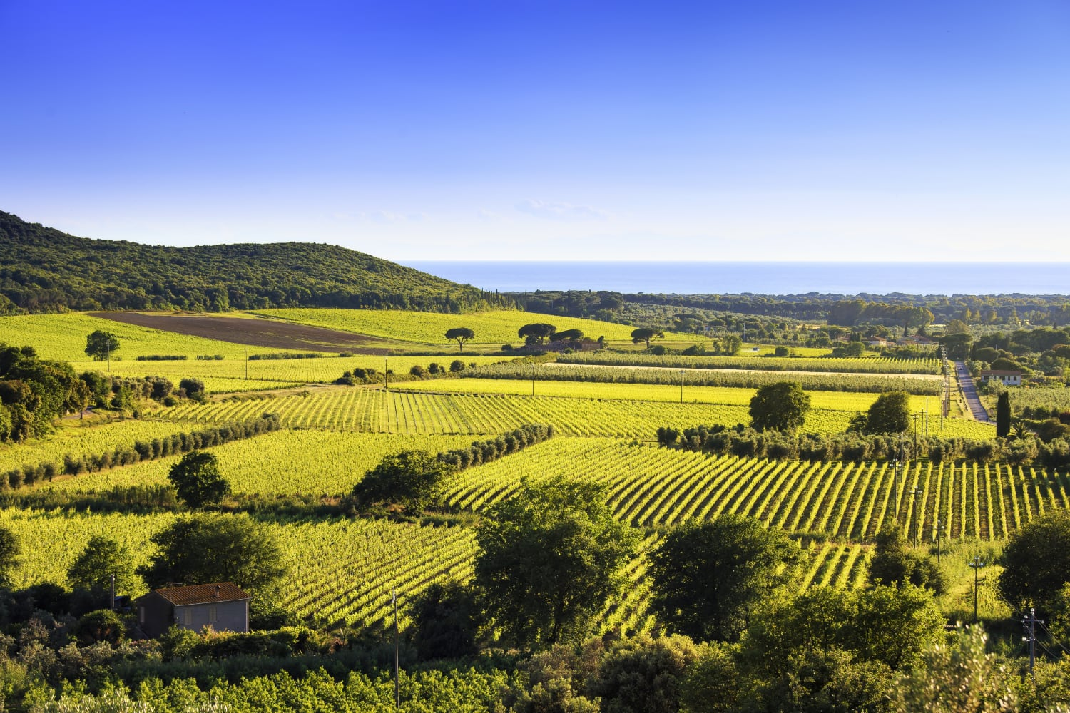 Super Tuscan vineyards overview