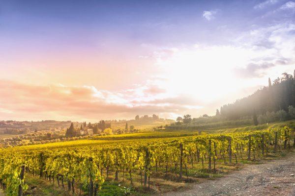 Chianti vineyard landscape